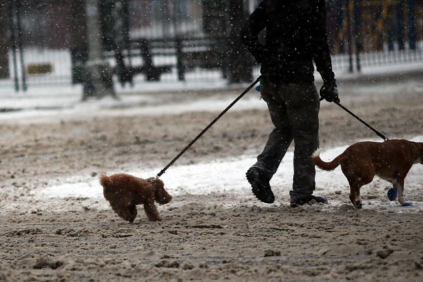 A man walks two dogs during a snowstorm on Jan 21, 2014, in New York City. -- PHOTO: AFP