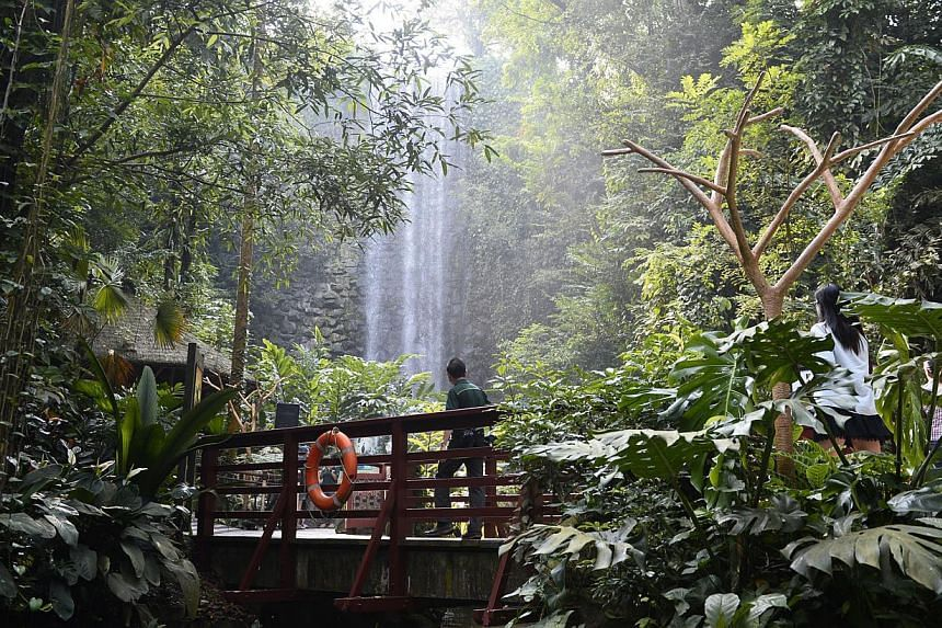 Couples can  have their marriages solemnised in front of the 30m-tall, man-made waterfall, the world's highest inside an aviary. The Bird Park has tried to attract more locals with regular talks in schools, and credit card promotions.