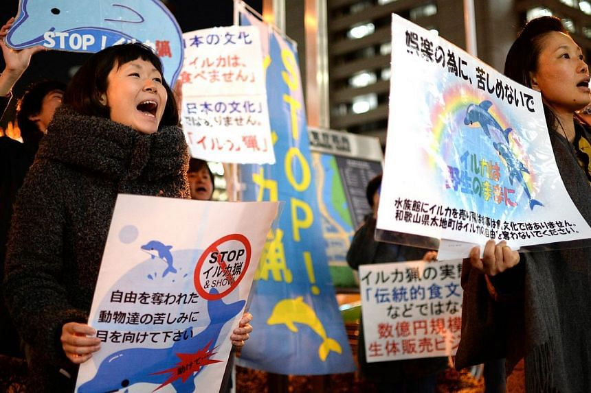 Around 20 anti-dolphin-hunting group members hold placards and shout slogans in front of Japan's Fisheries Agency in Tokyo on Jan 24, 2014, to urge the Japanese government to ban dolphin catching. Activists protesting against Japan's indigenous dolph
