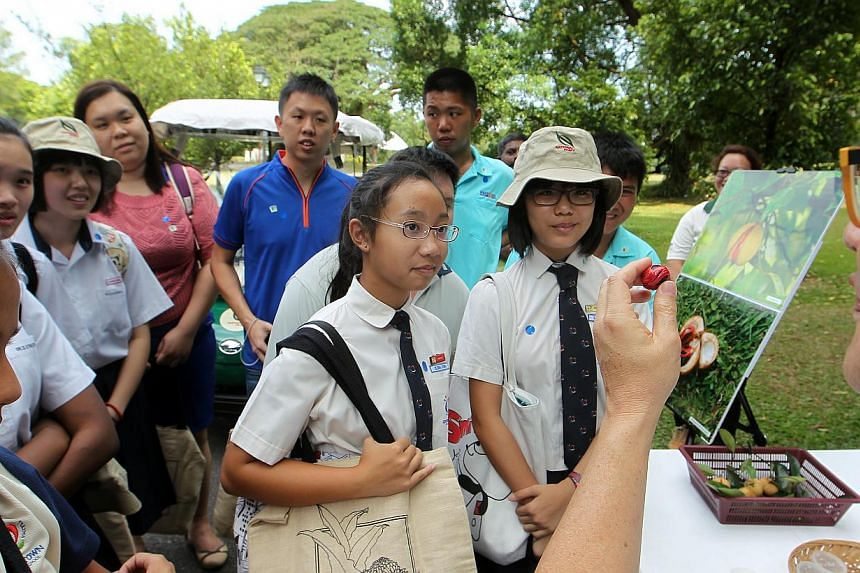 Queenstown Secondary School's Lim Wan Tong (foreground, second from right) and Elena Leong (centre, wearing spectacles) look at the fresh nutmeg held out by volunteer guide Bian Tan (extreme right) as he points out the flora and fauna at the Spice Te