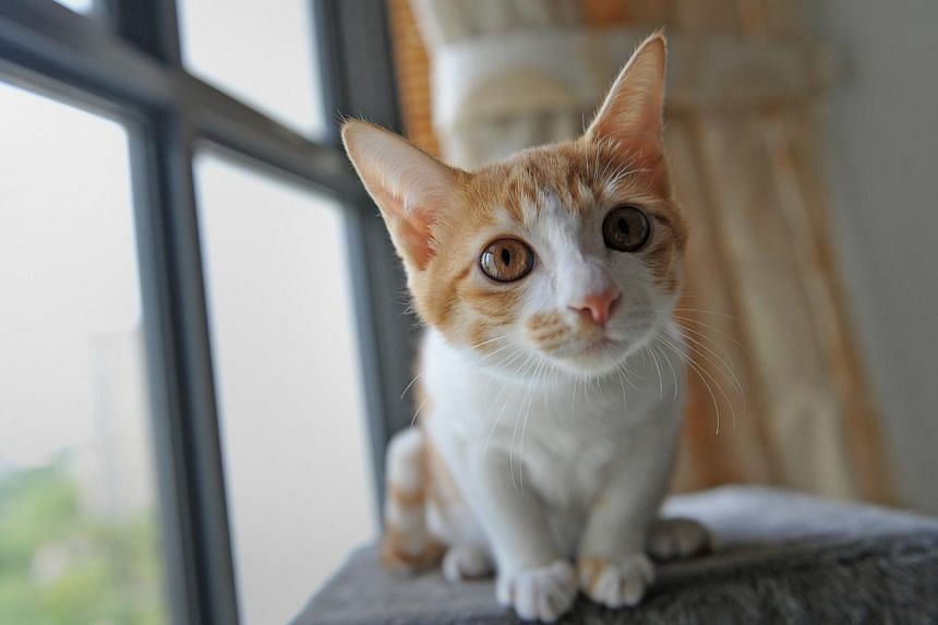 People can now submit their ideas for a new Codes of Animal Welfare for pet owners and the pet industry. -- ST FILE PHOTO: JOYCE FANG