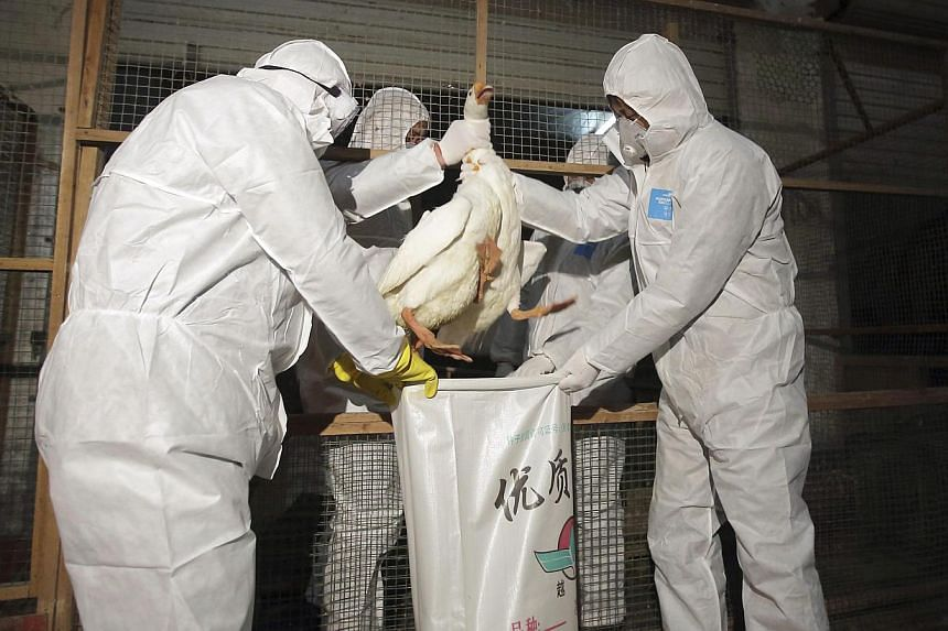Health officials in protective suits putting a goose into a sack as part of preventive measures against the H7N9 bird flu at a poultry market in Zhuji, Zhejiang province on January 5, 2014. -- FILE PHOTO: REUTERS