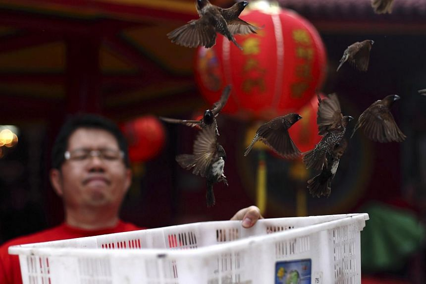 A man holds a basket as he releases sparrows to mark the first day of the Chinese Lunar New Year at Petak Sembilan Temple in Jakarta, on Jan 31, 2014. -- PHOTO: REUTERS