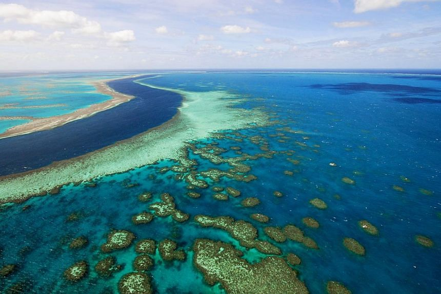 """Australia said it had made """"substantial"""" progress on Unesco benchmarks for protection of the Great Barrier Reef on Sunday in a report aimed at staving off a world heritage downgrade.-- PHOTO:BLOOMBERG"""