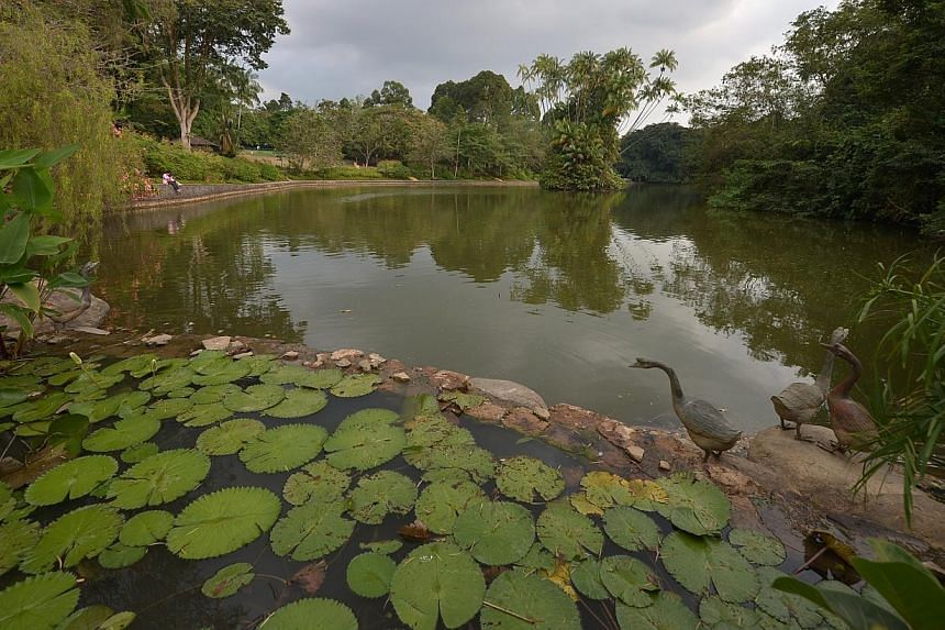 The Singapore Botanic Gardens has submitted its bid to become the country's first Unesco World Heritage Site.-- ST PHOTO:KUA CHEE SIONG
