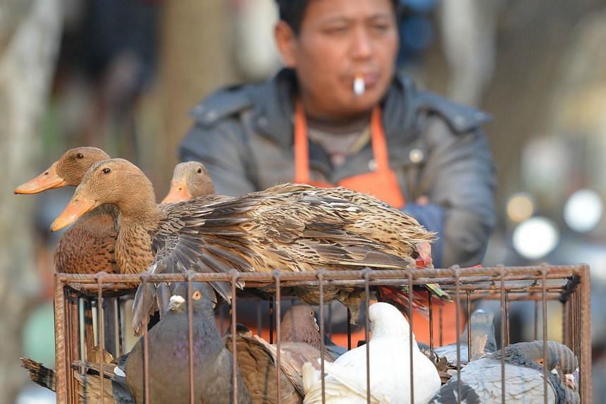 A vendor selling live poultry on a street in Shanghai on Jan 8, 2014.Chinese scientists sounded the alarm on Wednesday after a new bird flu virus, H10N8, killed an elderly woman in December and infected another individual last month. -- FILE PH