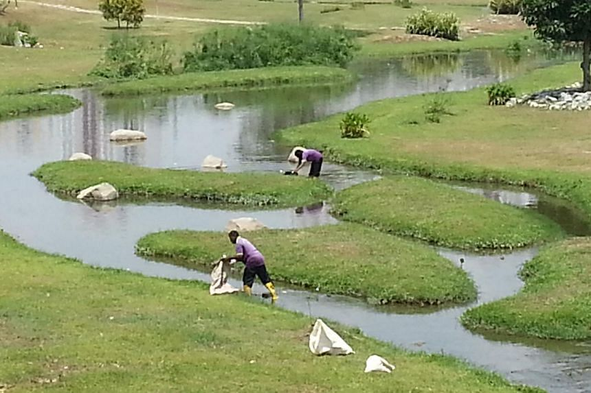 Cleaners clearing shoals of dead fish found along the river at Bishan-Ang Mo Kio Park.-- ST PHOTO: DAVID EE