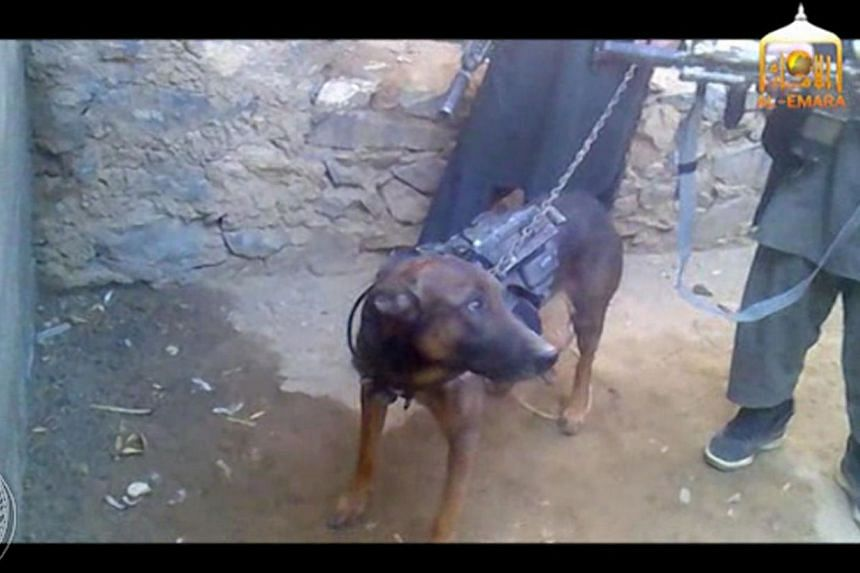 """A video posted on the insurgents' website on Wednesday and later on Facebook shows the animal, named by the Taleban as """"Colonel"""", being held on a leash in a small, well-lit courtyard surrounded by five men holding guns and grenades. --PHOTO:AFP"""