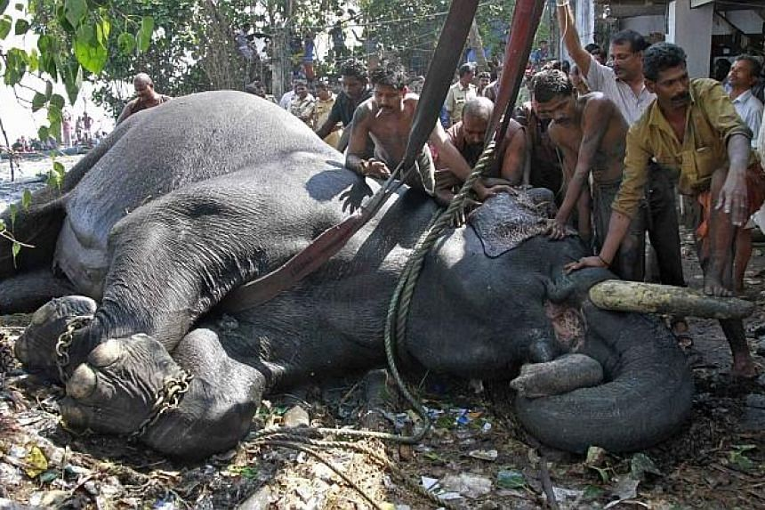 A vet administers glucose to Ayyappan after it was rescued from the marshland.The elephant was brought to the banks of the lake after nearly six hours of rescue operations but died while receiving treatment, according to the police. -- PHOTO: R