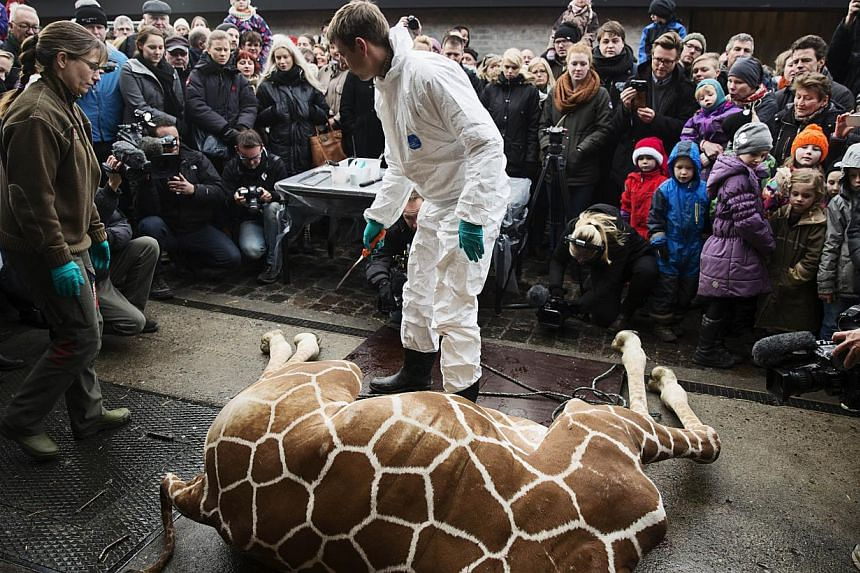 A perfectly healthy young giraffe named Marius was shot dead at Copenhagen zoo, on Feb 9, 2014, despite an online petition to save it signed by thousands of animal lovers.Many Danes on Monday, Feb 10, 2014, defended the killing of a healthy but