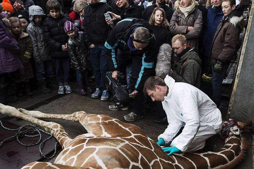 This handout photo released on Feb 11, 2014 shows a veterinarian making an open to public autopsy on a giraffe Marius on Feb 9 at a zoo in Copenhagen. -- PHOTO: AFP