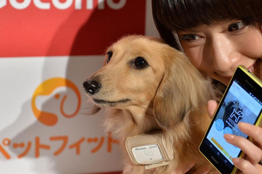 """A dog (left) wears a """"Petfit tag"""" equipped with 3G and Bluetooth from Japan's largest mobile phone carrier NTT Docomo during a press briefing in Tokyo, on Feb 13, 2014.A high-tech collar attachment that will allow pet owners to monitor their do"""