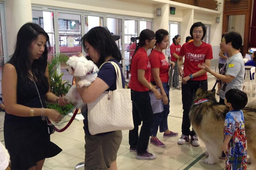 Over 70 pet owners brought their pets for free health checks at Jurong Spring Community Club on Feb 15, 2014.-- ST PHOTO: AMELIA TENG