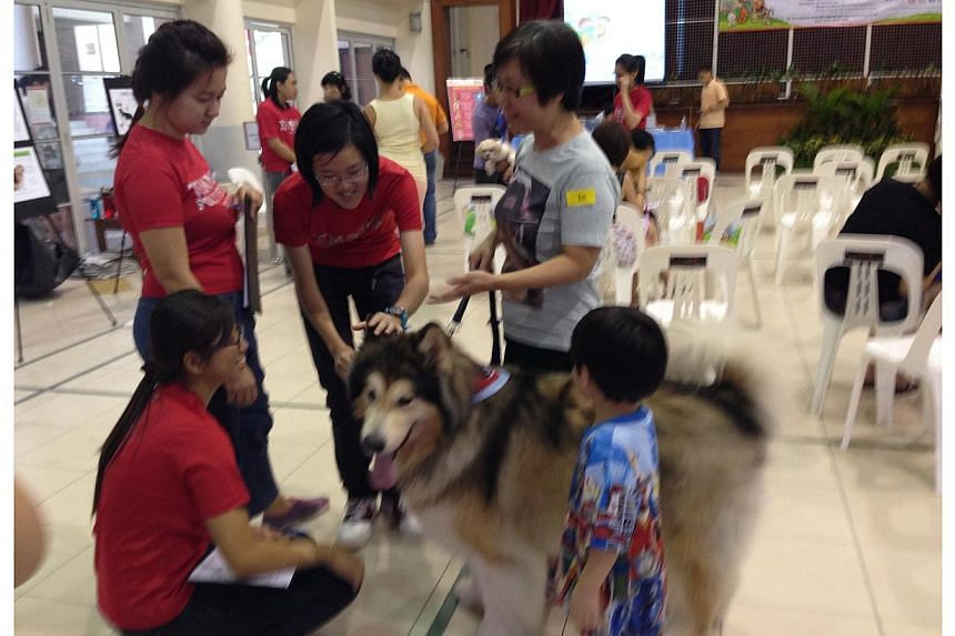 Over 70 pet owners brought their pets for free health checks at Jurong Spring Community Club on Feb 15, 2014. -- ST PHOTO: AMELIA TENG