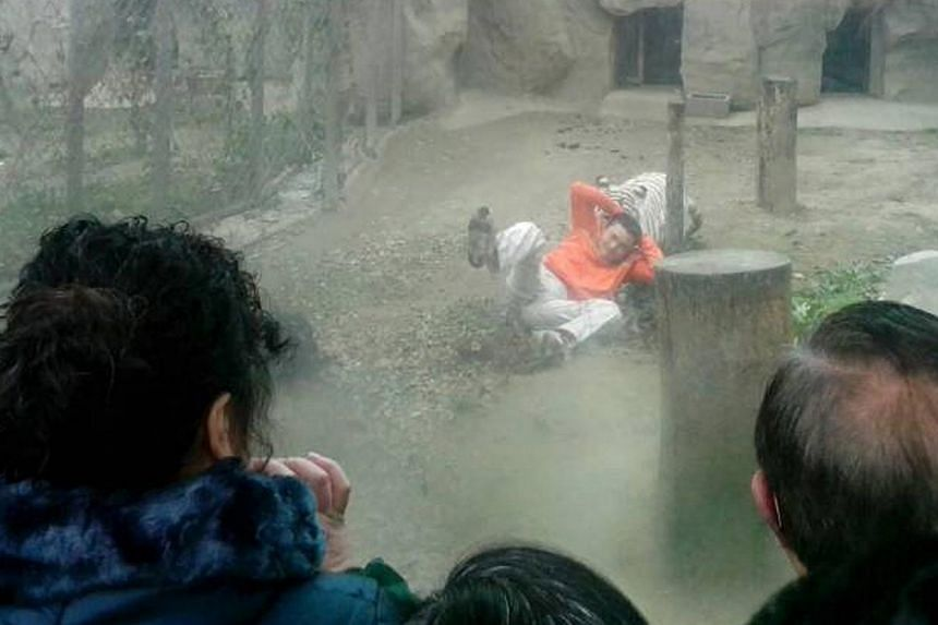 A female Bengali white tiger dragging Mr Yang Jinhai by his shirt after he climbed into the enclosure at a zoo in Chengdu, Sichuan province on Feb 16, 2014. -- PHOTO: REUTERS