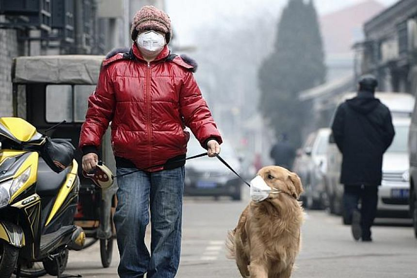 A man and his dog, both wearing masks, walk along a small alley on a hazy day in Beijing, Feb 23, 2014.China has sent teams of investigators to parts of the country worst hit by air pollution as part of efforts to stop the heavy smog engulfing