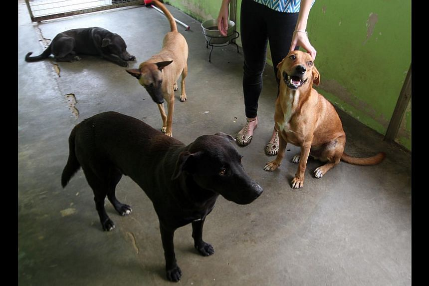 Four of five dogs taken from the camp that are now under the care of Animal Lovers League.