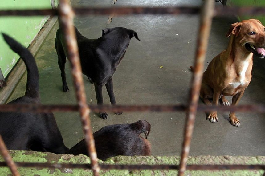 """Four of the dogs allegedly abused at Pasir Ris camp are pictured on Feb 24, 2014. The Army has said its Pasir Ris camp has suffered a series of attacks by """"increasingly aggressive"""" stray dogs, after punishing a full-time National Serviceman who filme"""