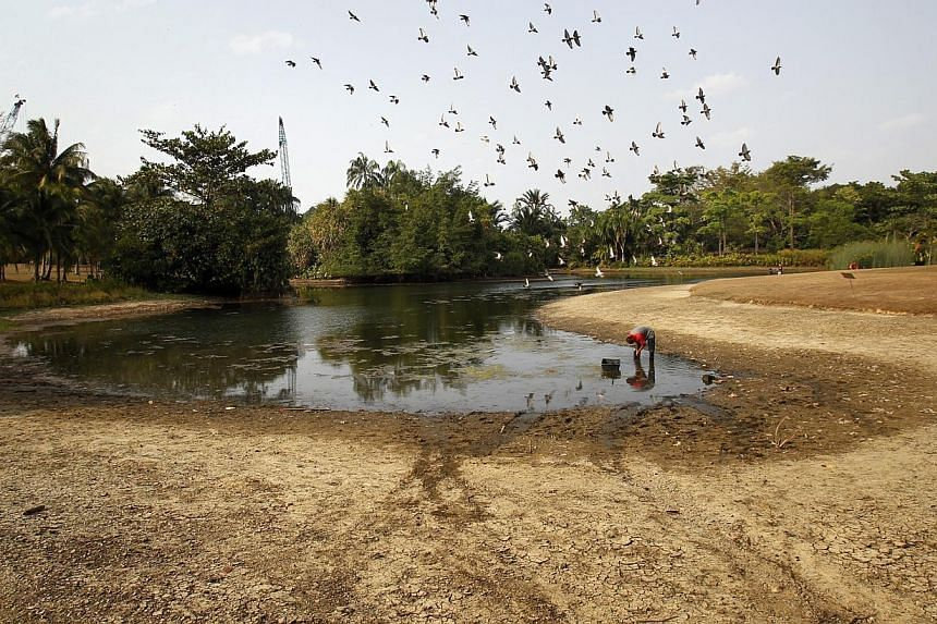 Dry conditions in Botanic Gardens onFeb 24,2014. -- ST FILE PHOTO: KEVIN LIM
