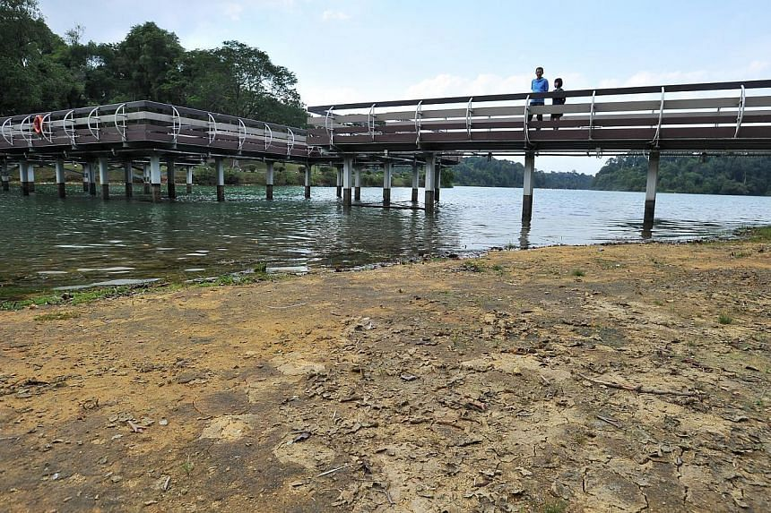 Singapore has been experiencing a dry spell over the past few weeks. Low water level at the zig-zag bridge at MacRitchie Reservoir on Feb 5, 2014. -- ST FILE PHOTO: LIM YAOHUI