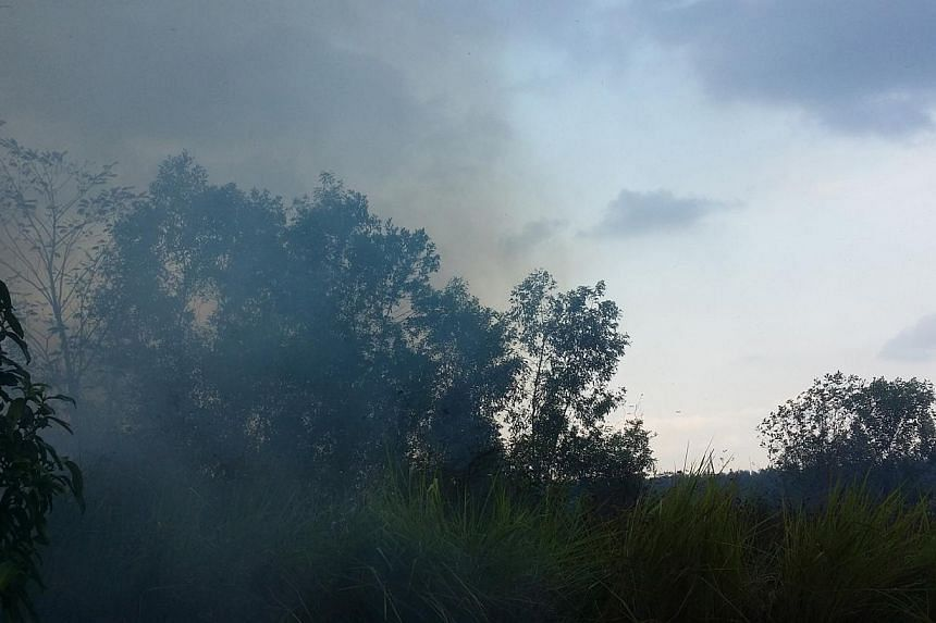 A patch of brush that caught fire in Punggol on Saturday, March 1, 2014,a likely result of one of Singapore's longest periods of dry weather.-- PHOTO: STOMP