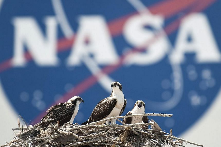 A family of Osprey are seen outside the Nasa Kennedy Space Center Vehicle Assembly Building in Cape Canaveral, Florida on May 13, 2010. Nasa says their relationship with Russia remained normal despite the ongoing international crisis in Ukraine. -- F
