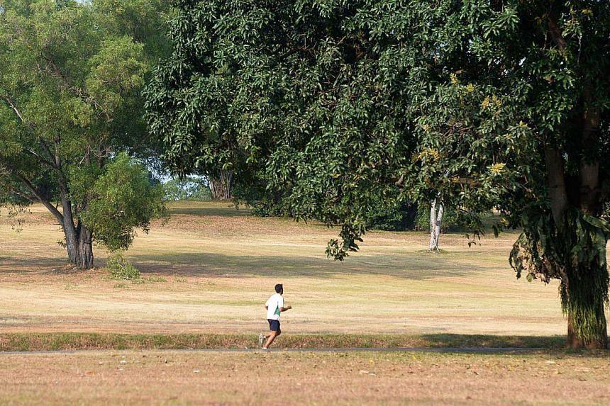A lone runner at Bidadari on Feb 25, 2014. -- ST FILE PHOTO: JAMIE KOH