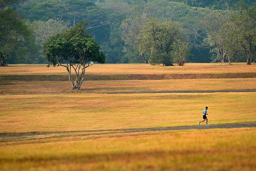 Vegetation in Bidadari Park on Thursday, March 7, 2014. -- ST PHOTO:KUA CHEE SIONG