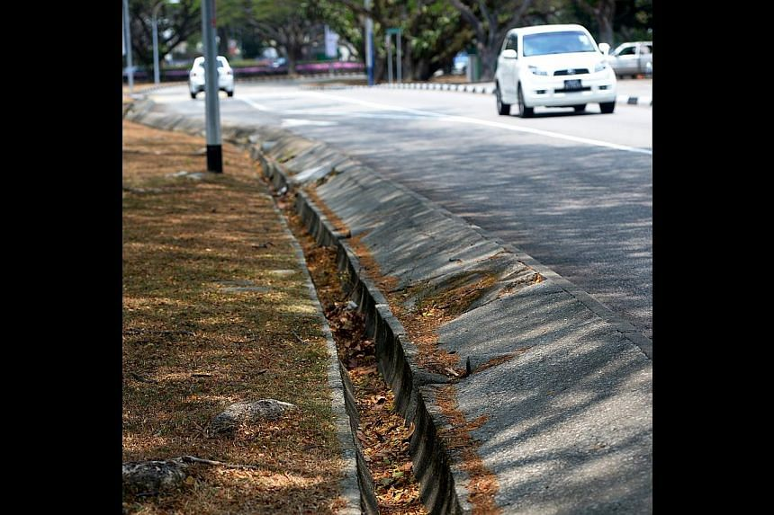 The dry weather has caused increased leaf shedding. NEA is particularly concerned about the leaves in drains which may cause drain chokes and result in potential mosquito breeding.-- ST PHOTO:JAMIE KOH