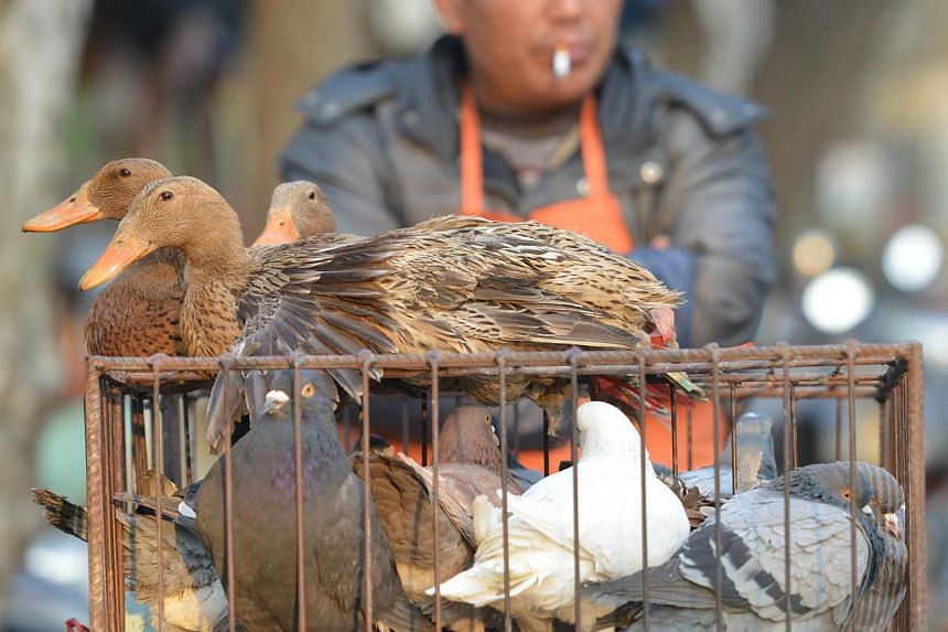 A vendor selling live poultry on a street in Shanghai on Jan 6, 2014. -- FILE PHOTO: AFP