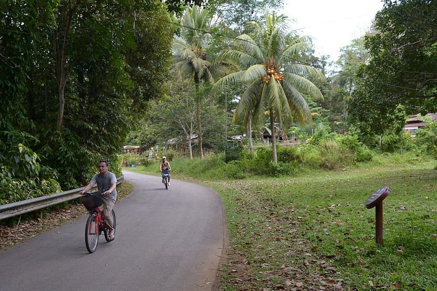 While Pulau Ubin's population has dwindled from 2,000 in the 1950s to 1970s to just 38 today, more than 300,000 visitors throng the island every year to enjoy its rustic setting and nature.