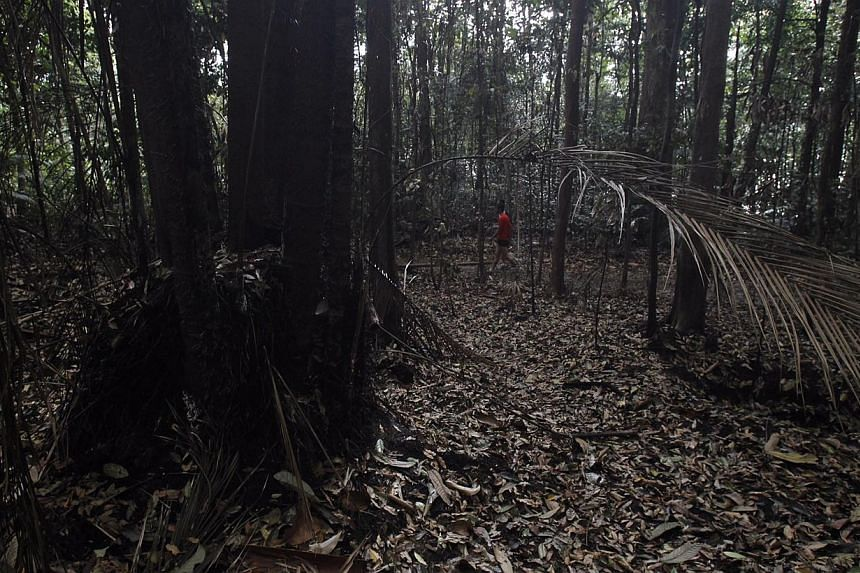 A charred area in the Central Catchment Nature Reserve following a March 5 blaze that required the combined forces of the SCDF, PUB and NParks in order to put out. Firefighting operations took over four hours to complete.