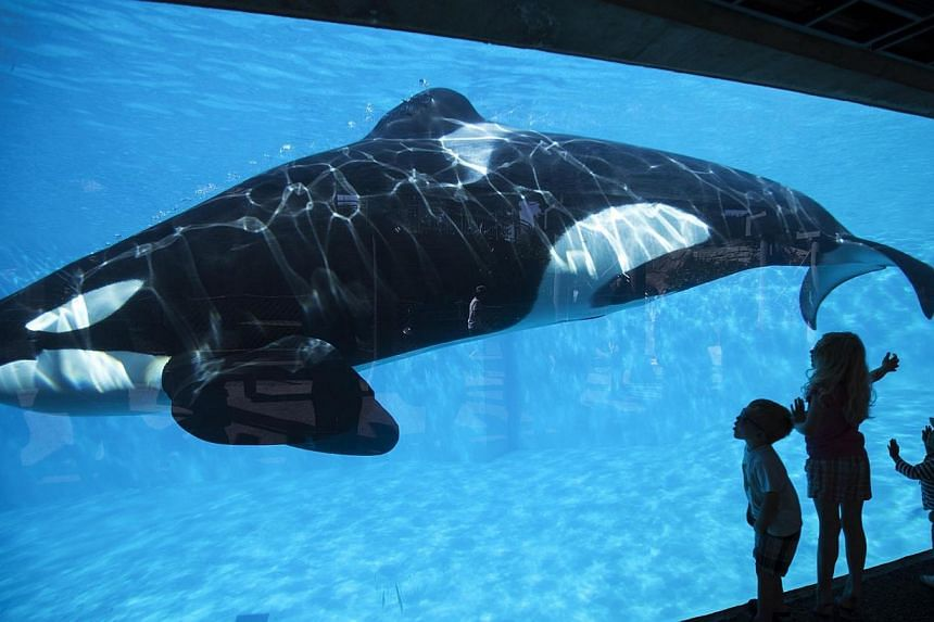 Young children get a close-up view of an Orca killer whale during a visit to the animal theme park SeaWorld in San Diego, California March 19, 2014 -- PHOTO: REUTERS