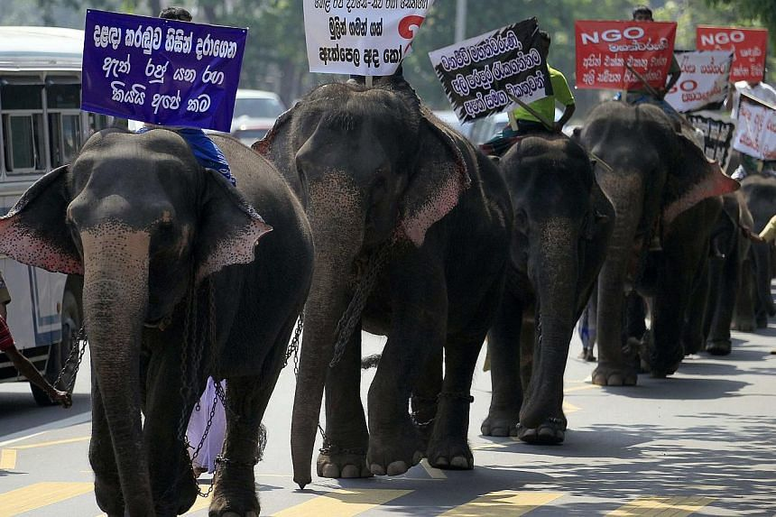 Owners of tamed elephants take part in a march mounted on elephants to the Ministry of Wildlife Conservation in Colombo March 26, 2014. The owners joined the march on Wednesday to demand tuskers under an animal exchange programme with other countries