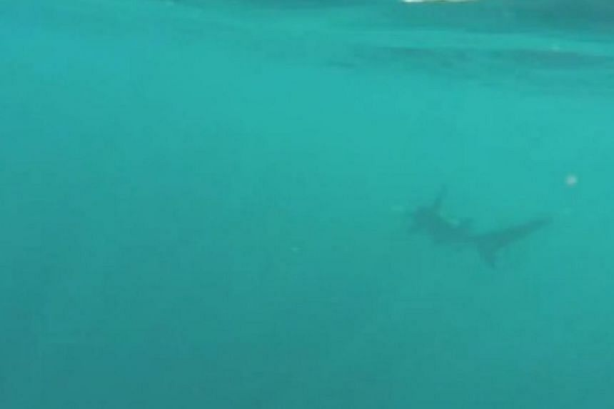 """A hammerhead shark dragged a college student in his kayak up the Atlantic coast for a two-hour """"South Florida sleigh ride"""" that the kayaker taped with a head-mounted camera and posted on YouTube. -- SCREENGRAB: YOUTUBE"""