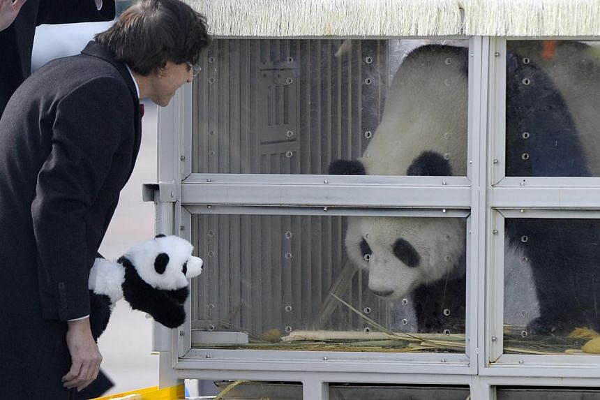 Belgium's Prime Minister Elio Di Rupo looking at the giant panda Hao Hao, one of two pandas that arrive in Belgium in Feb 2014. -- FILE PHOTO: REUTERS
