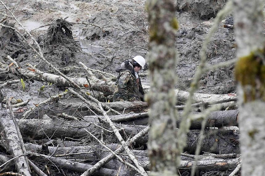 A rescue worker struggles through a pile of trees while searching for victims of a mudslide in Oso, Washington, on March 30, 2014. -- PHOTO: REUTERS