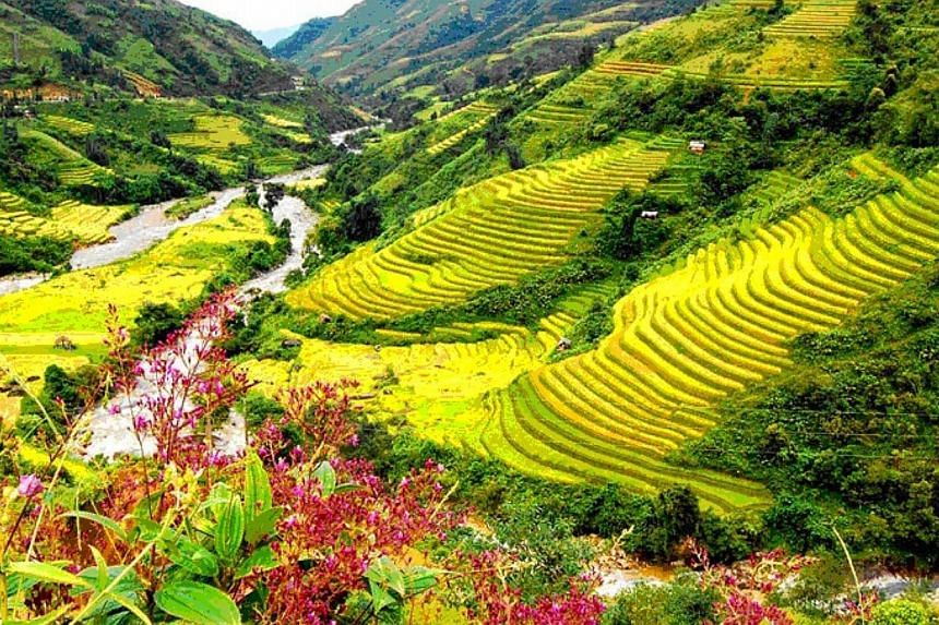 Sapa in the north of Vietnam is a gateway to incredible valleys, hill tribe communities and tiered padi fields. -- PHOTO: VIETJET