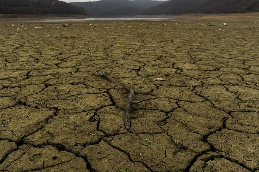 A file picture taken on January 22, 2014 shows a tree branch lying in the dry bed of Badovc artificial lake.The chances have increased over the past month that the much-feared El Nino phenomenon, which has the potential to wreak havoc on global
