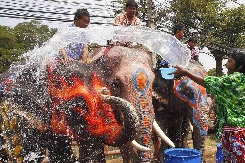 A girl splashes elephants with water in celebration of the Songkran water festival in Thailand's Ayutthaya province on April 9, 2014. -- PHOTO: REUTERS
