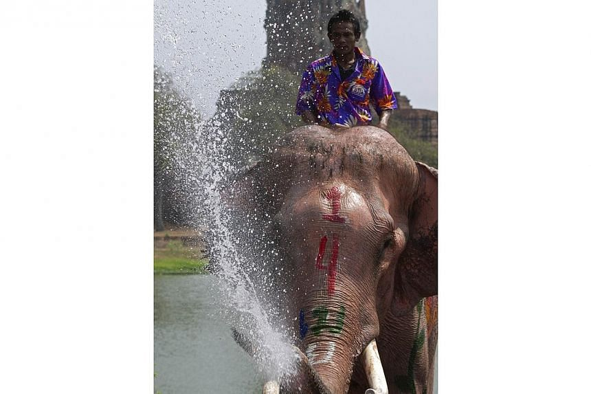 An elephant sprays water during a water battle with elephants and tourists as people celebrate ahead of the Songkran Festival for the Thai New Year in Ayutthaya province on April 9, 2014. -- PHOTO: AFP