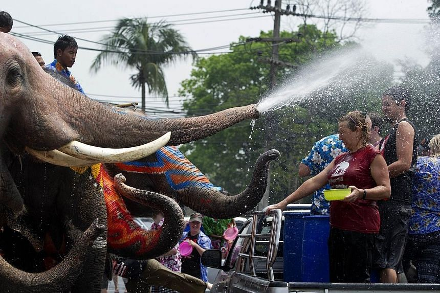 Elephants splash foreign tourists in the back of a truck with water as they take part in water battles ahead of the Songkran Festival for the Thai New Year in Ayutthaya province on April 9, 2014. -- PHOTO: AFP