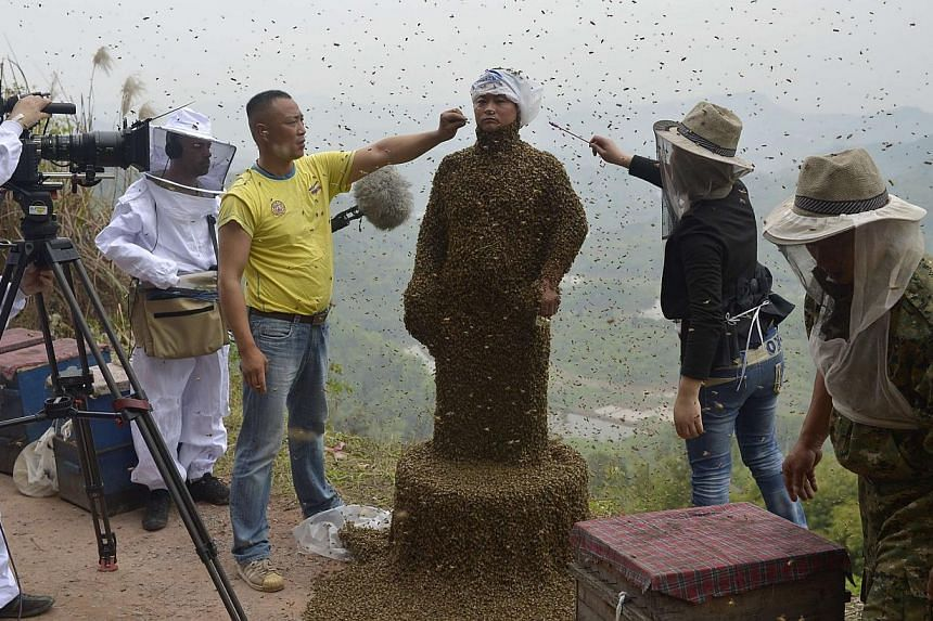 Assistants use burning incense and cigarettes to drive away from the face of She Ping, a 34-year-old beekeeper, during an attempt to cover She's body with bees, in Chongqing municipality April 9, 2014. -- PHOTO: REUTERS