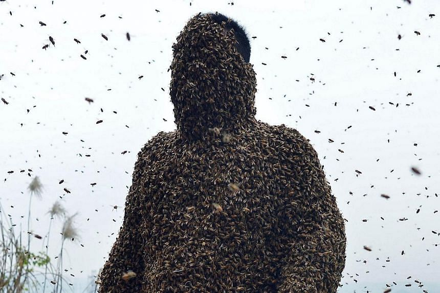 This picture taken on April 9, 2014, shows She Ping, a 34 year-old local beekeeper, covered with a swarm of bees on a small hill in southwest China's Chongqing. -- PHOTO: AFP