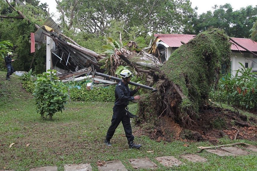 At least three people were injured when a tree collapsed on the grounds of Alexandra Hospital. The tree is believed to have uprooted after a storm earlier on Thursday, April 10, 2014, morning. -- ST PHOTO:NEO XIAOBIN