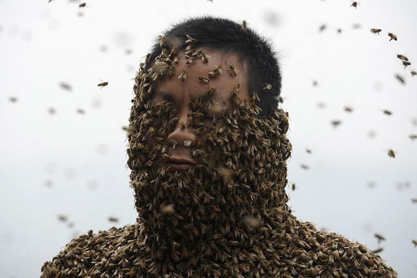 She Ping, a 34-year-old beekeeper, is seen during an attempt to cover his body with bees, in Chongqing municipality, April 9, 2014. -- PHOTO: REUTERS