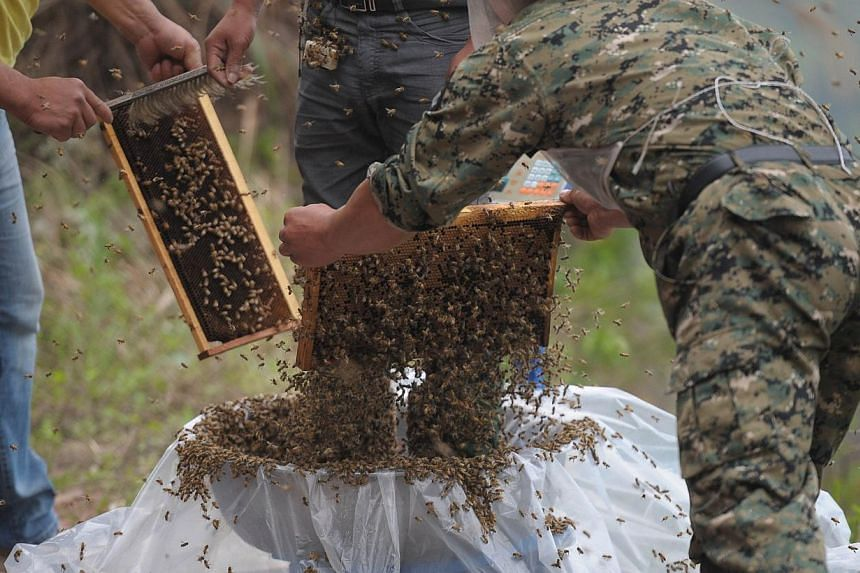 This picture taken on April 9, 2014 shows She Ping (C), a 34 year-old local beekeeper, preparing to wear bees on a small hill in southwest China's Chongqing.-- PHOTO: AFP
