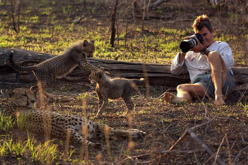 Film-maker Kim Wolhuter, who lived in the wild with a family of cheetahs (above) to shoot the documentary. -- PHOTO: DISCOVERY CHANNEL