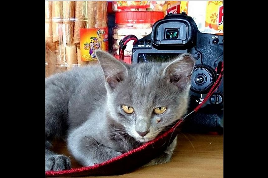 A cat snuggles up to my camera during an assignment on St John's Island. An unexpected sight but definitely not an unwelcome one. -- ST PHOTO: CHEW SENG KIM