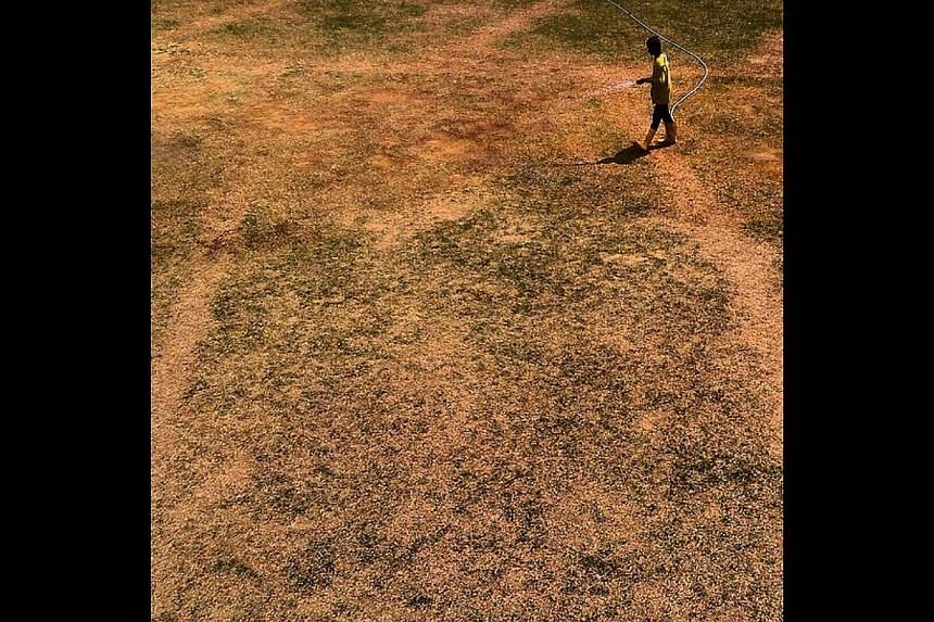 A worker waters a parched field in Jurong West during Singapore's dry spell. -- ST PHOTO: DESMOND FOO